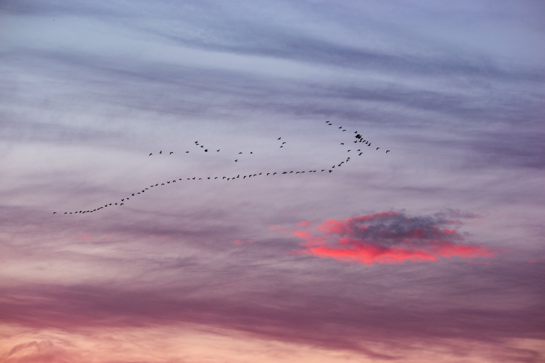 Wasim Muklashy Photography_Wasim of Nazareth_Sauvie Island_Portland_Oregon_127.jpg