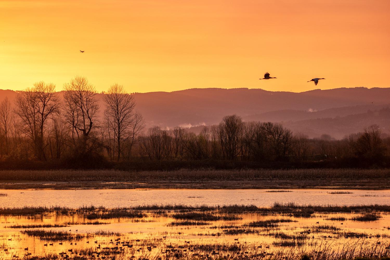 Wasim Muklashy Photography_Wasim of Nazareth_Sauvie Island_Portland_Oregon_114.jpg