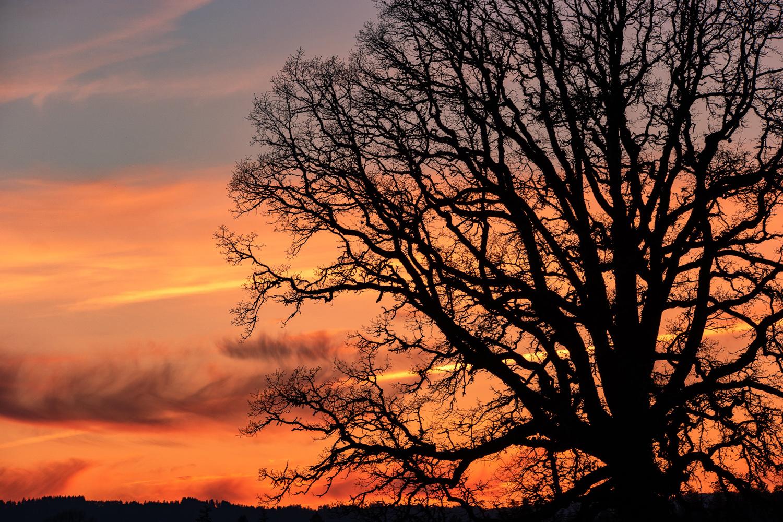 Wasim Muklashy Photography_Wilsonville_Sherwood_Portland_Oregon_113.jpg