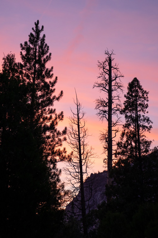 Wasim Muklashy Photography_Sierra Nevada Mountains_Sierras_Kings Canyon Sequoia National Park_California_103 (1).jpg