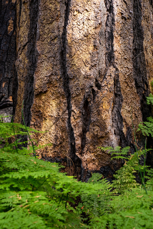 Wasim Muklashy Photography_Sierra Nevada Mountains_Sierras_Kings Canyon Sequoia National Park_California_105.jpg
