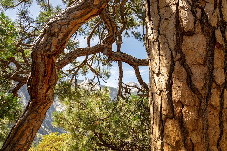 Wasim Muklashy Photography_Sierra Nevada Mountains_Sierras_Kings Canyon Sequoia National Park_California_110.jpg