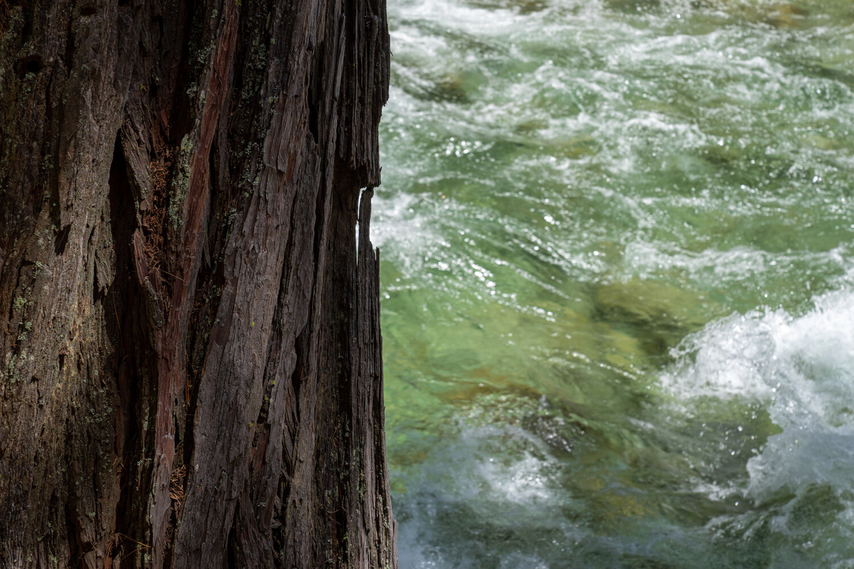 Wasim Muklashy Photography_Sierra Nevada Mountains_Sierras_Kings Canyon Sequoia National Park_California_113.jpg