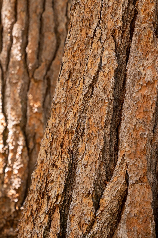 Wasim Muklashy Photography_Sierra Nevada Mountains_Sierras_Kings Canyon Sequoia National Park_California_119.jpg