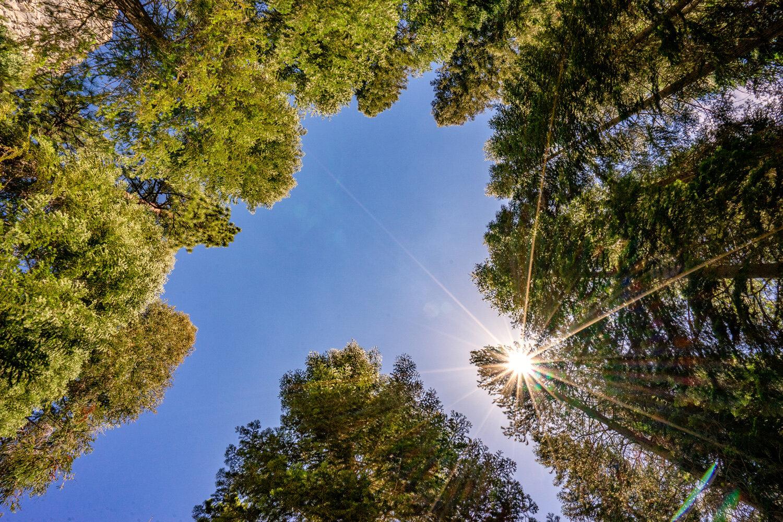 Wasim Muklashy Photography_Sierra Nevada Mountains_Sierras_Kings Canyon Sequoia National Park_California_118.jpg