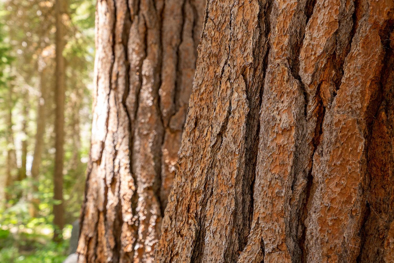 Wasim Muklashy Photography_Sierra Nevada Mountains_Sierras_Kings Canyon Sequoia National Park_California_120.jpg