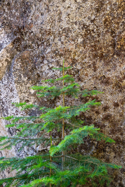 Wasim Muklashy Photography_Sierra Nevada Mountains_Sierras_Kings Canyon Sequoia National Park_California_122.jpg