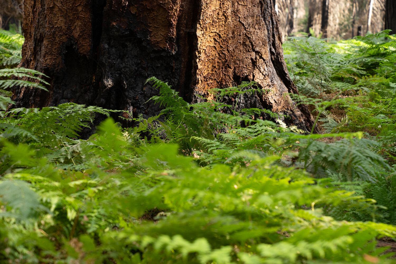 Wasim Muklashy Photography_Sierra Nevada Mountains_Sierras_Kings Canyon Sequoia National Park_California_147.jpg