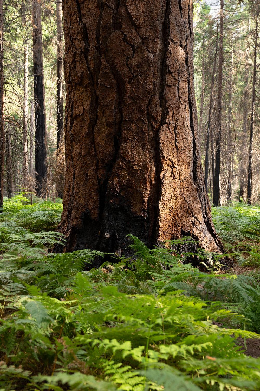Wasim Muklashy Photography_Sierra Nevada Mountains_Sierras_Kings Canyon Sequoia National Park_California_148.jpg