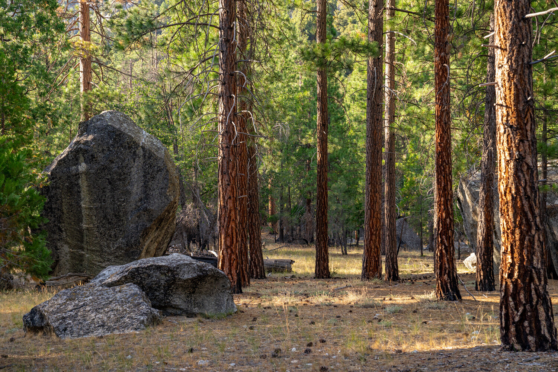 Wasim Muklashy Photography_Sierra Nevada Mountains_Sierras_Kings Canyon Sequoia National Park_California_149.jpg