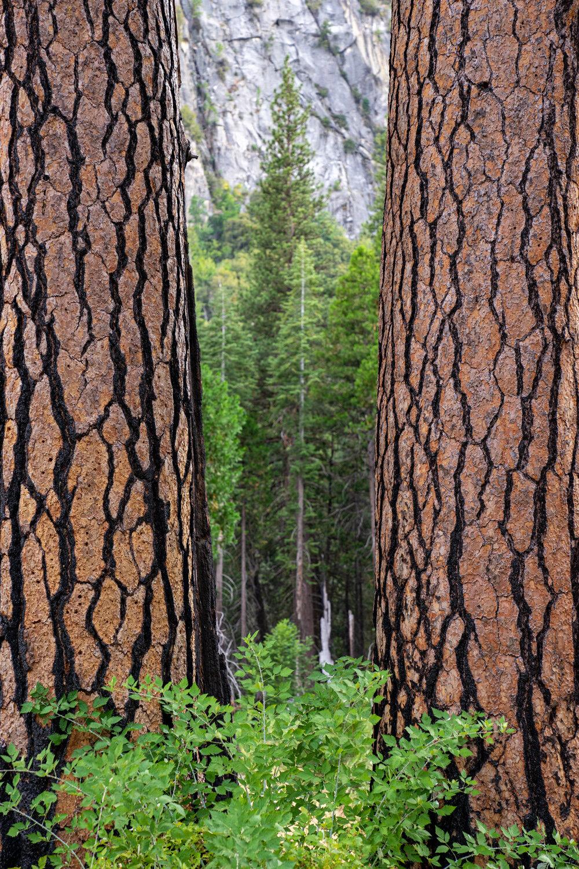 Wasim Muklashy Photography_Sierra Nevada Mountains_Sierras_Kings Canyon Sequoia National Park_California_153.jpg
