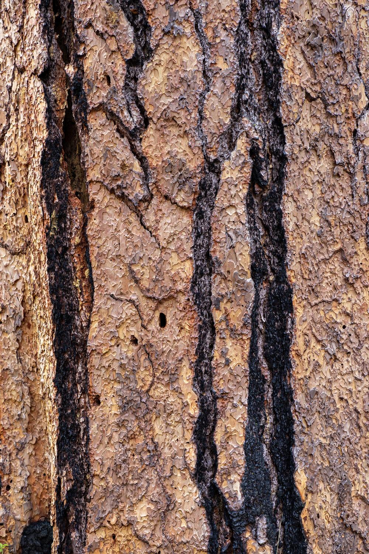 Wasim Muklashy Photography_Sierra Nevada Mountains_Sierras_Kings Canyon Sequoia National Park_California_155.jpg