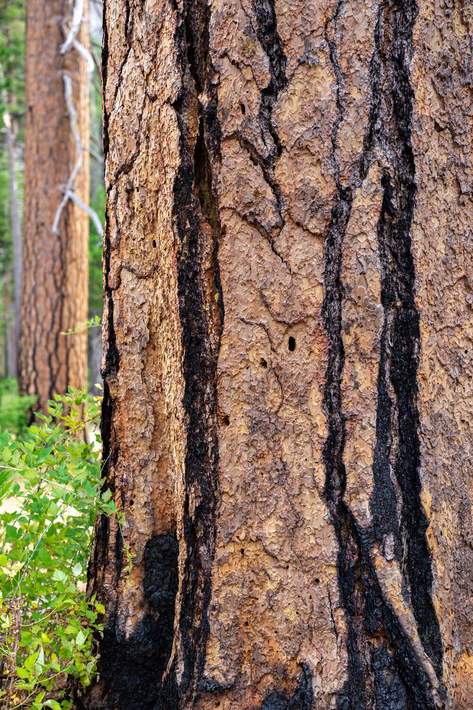 Wasim Muklashy Photography_Sierra Nevada Mountains_Sierras_Kings Canyon Sequoia National Park_California_156.jpg