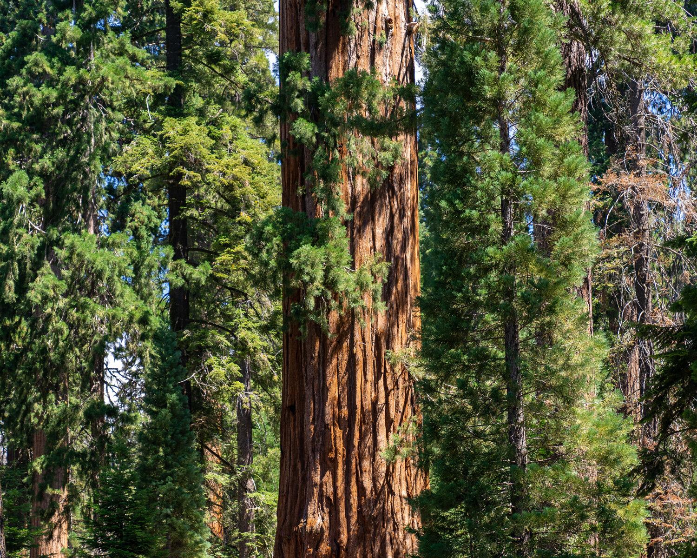Wasim Muklashy Photography_Sierra Nevada Mountains_Sierras_Kings Canyon Sequoia National Park_California_159.jpg