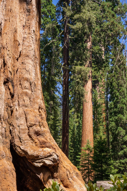 Wasim Muklashy Photography_Sierra Nevada Mountains_Sierras_Kings Canyon Sequoia National Park_California_161.jpg