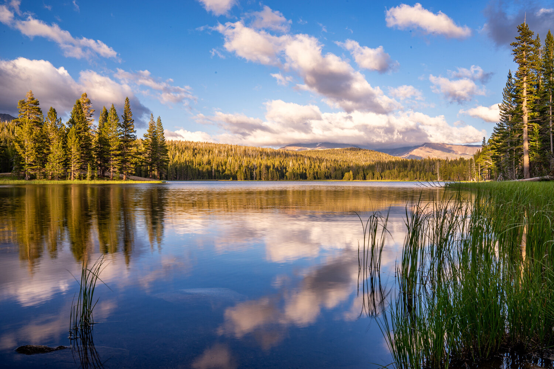Wasim Muklashy Photography_Sierra Nevada Mountains_Sierras_Tuolumne Meadows_Yosemite National Park_California_114.jpg