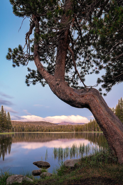Wasim Muklashy Photography_Sierra Nevada Mountains_Sierras_Tuolumne Meadows_Yosemite National Park_California_121.jpg