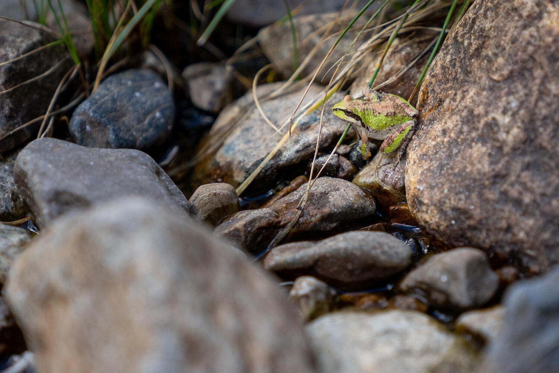Wasim Muklashy Photography_Sierra Nevada Mountains_Sierras_Tuolumne Meadows_Yosemite National Park_California_224.jpg