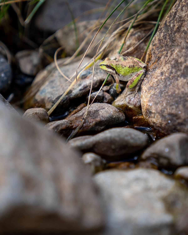 Wasim Muklashy Photography_Sierra Nevada Mountains_Sierras_Tuolumne Meadows_Yosemite National Park_California_225.jpg