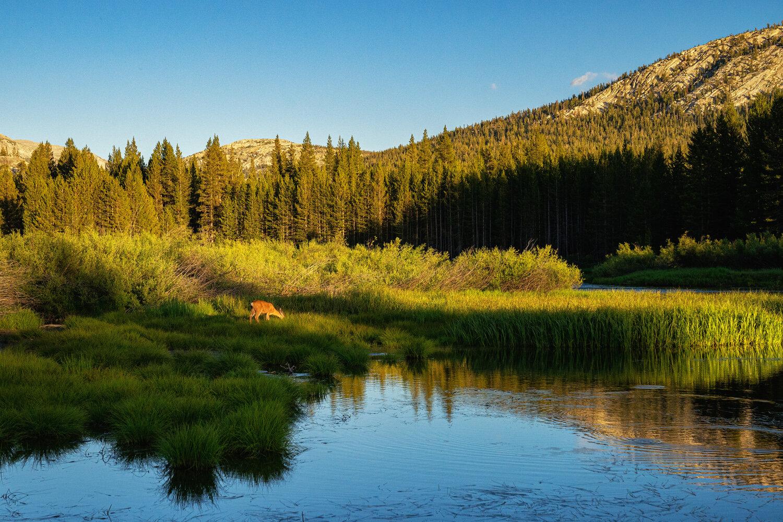 Wasim Muklashy Photography_Sierra Nevada Mountains_Sierras_Tuolumne Meadows_Yosemite National Park_California_108.jpg