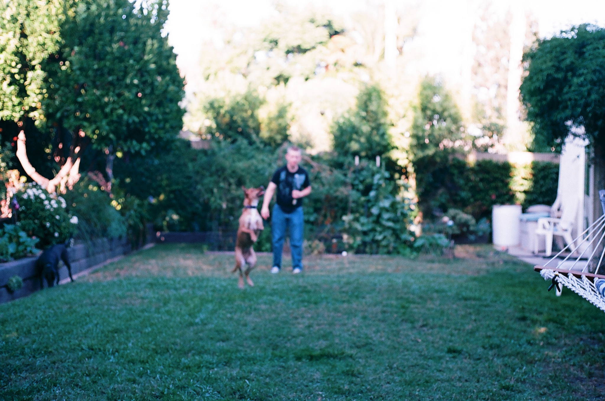 Summer Nights Kodak Ektar 100 Film - Out of Focus Fetch by Ellingsen Photography