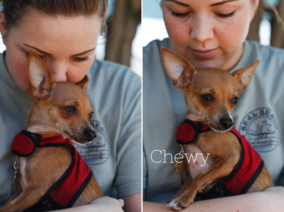 Ellingsen Photography Seal Beach Animal Care Center Adoptable Dogs Shelter Rescue Orange County-Chewy