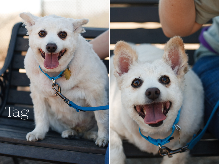 Ellingsen Photography Seal Beach Animal Care Center Adoptable Dogs Shelter Rescue Orange County-Tag