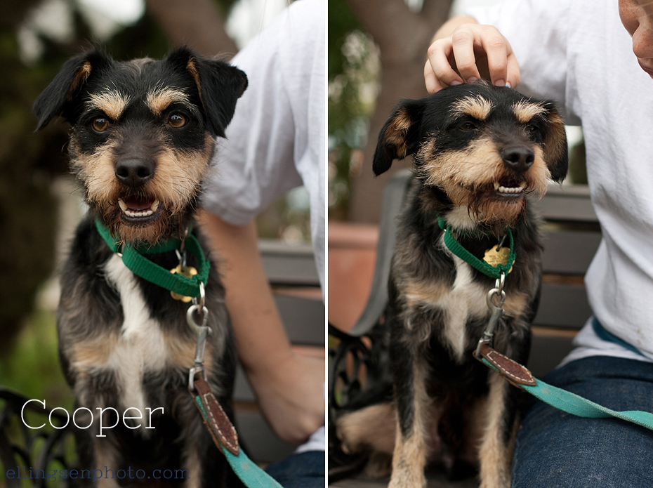 Ellingsen Photography Orange County SBACC Adoptable Shelter Rescue Dogs-Cooper