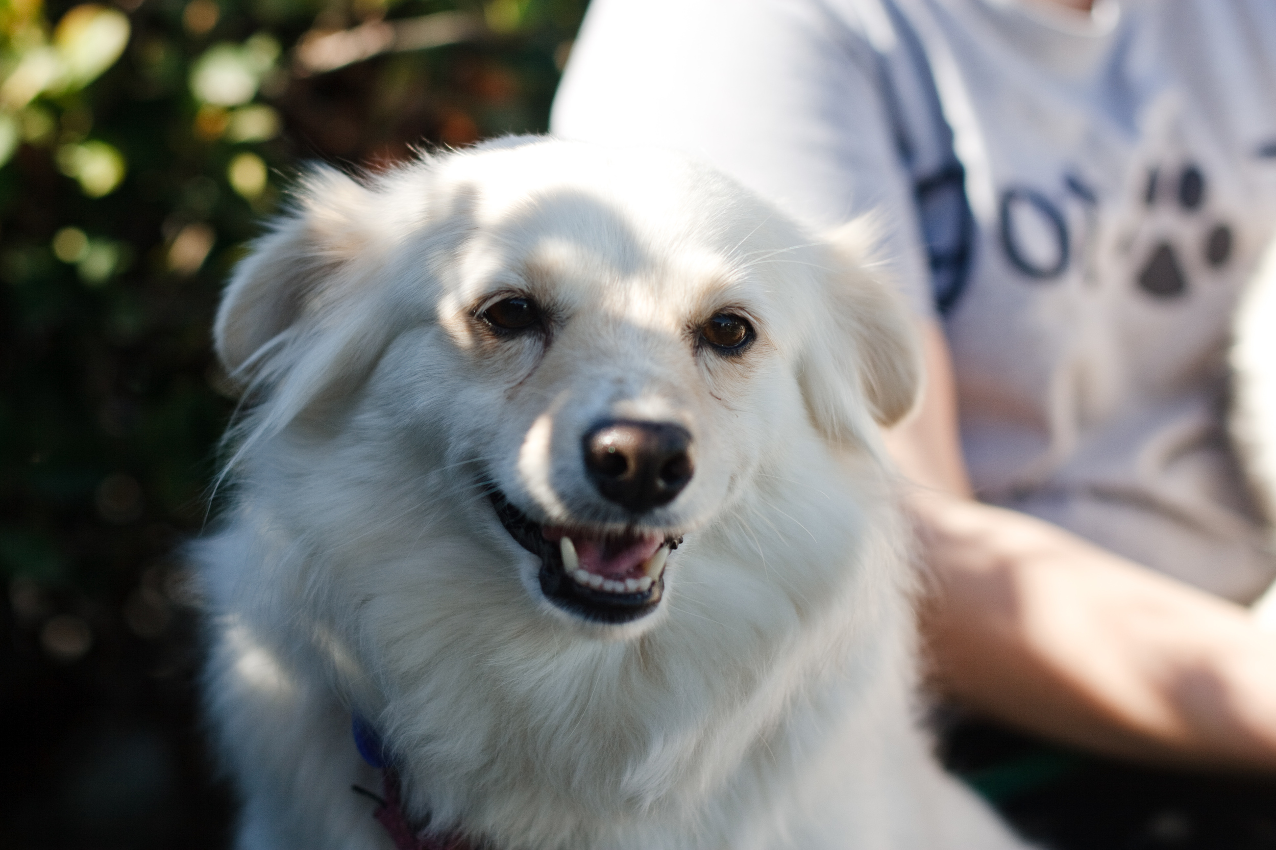 Seal Beach Animal Care Center Adoptable Dogs by Ellingsen Photography-Patsy & Lindsay