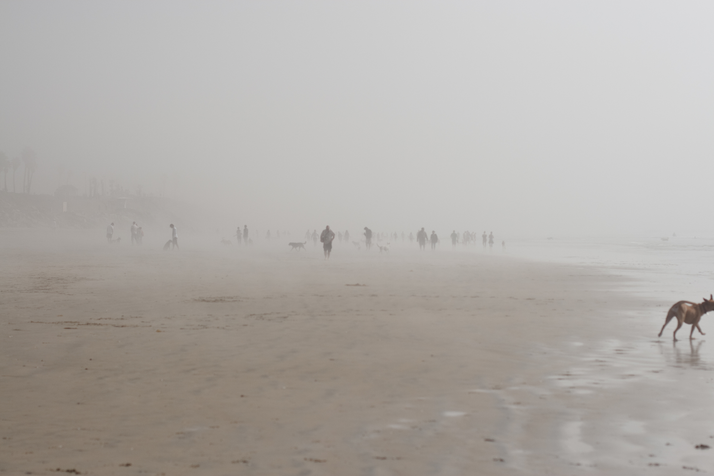 Ellingsen Photography Huntington Dog Beach The Fog