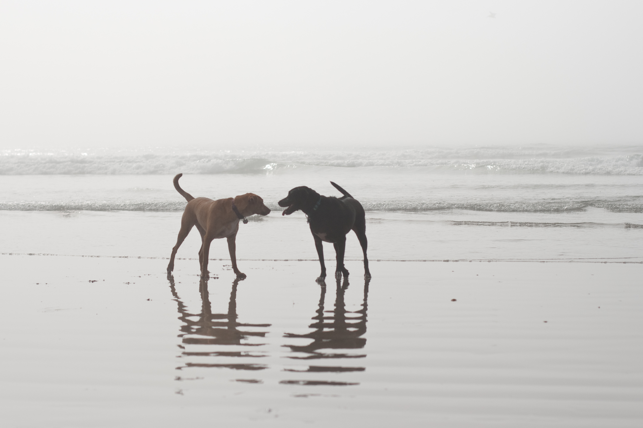 Ellingsen Photography Huntington Dog Beach Cassidy & Anja