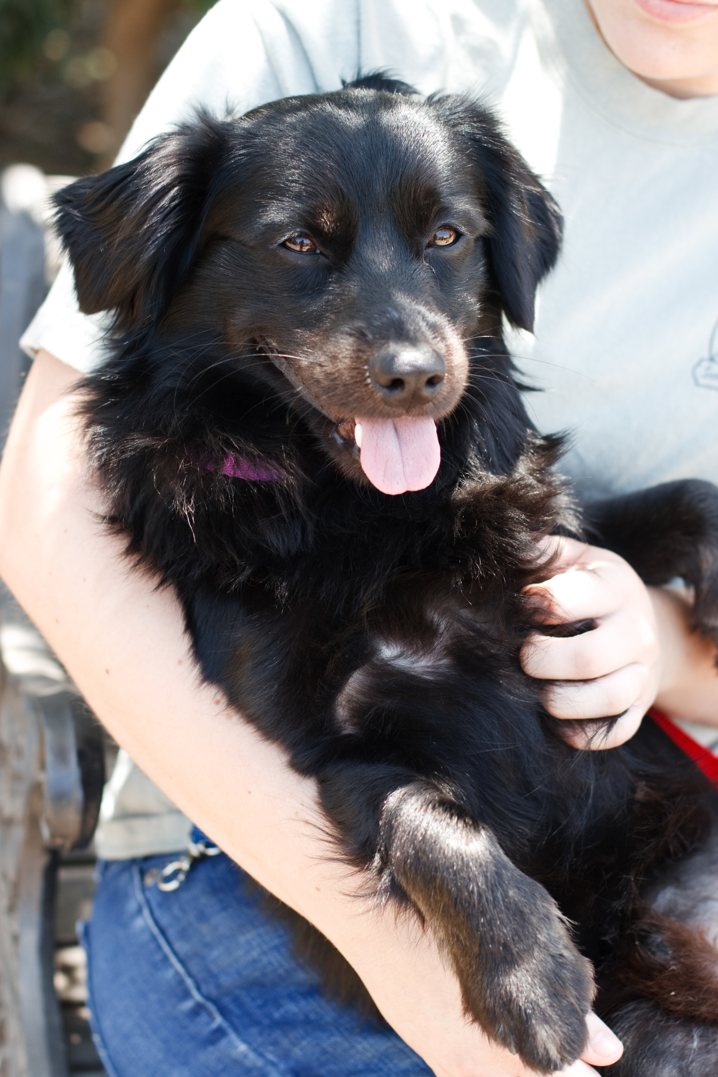 Ellingsen Photography Orange County SBACC Adoptable Shelter Dogs-Harris