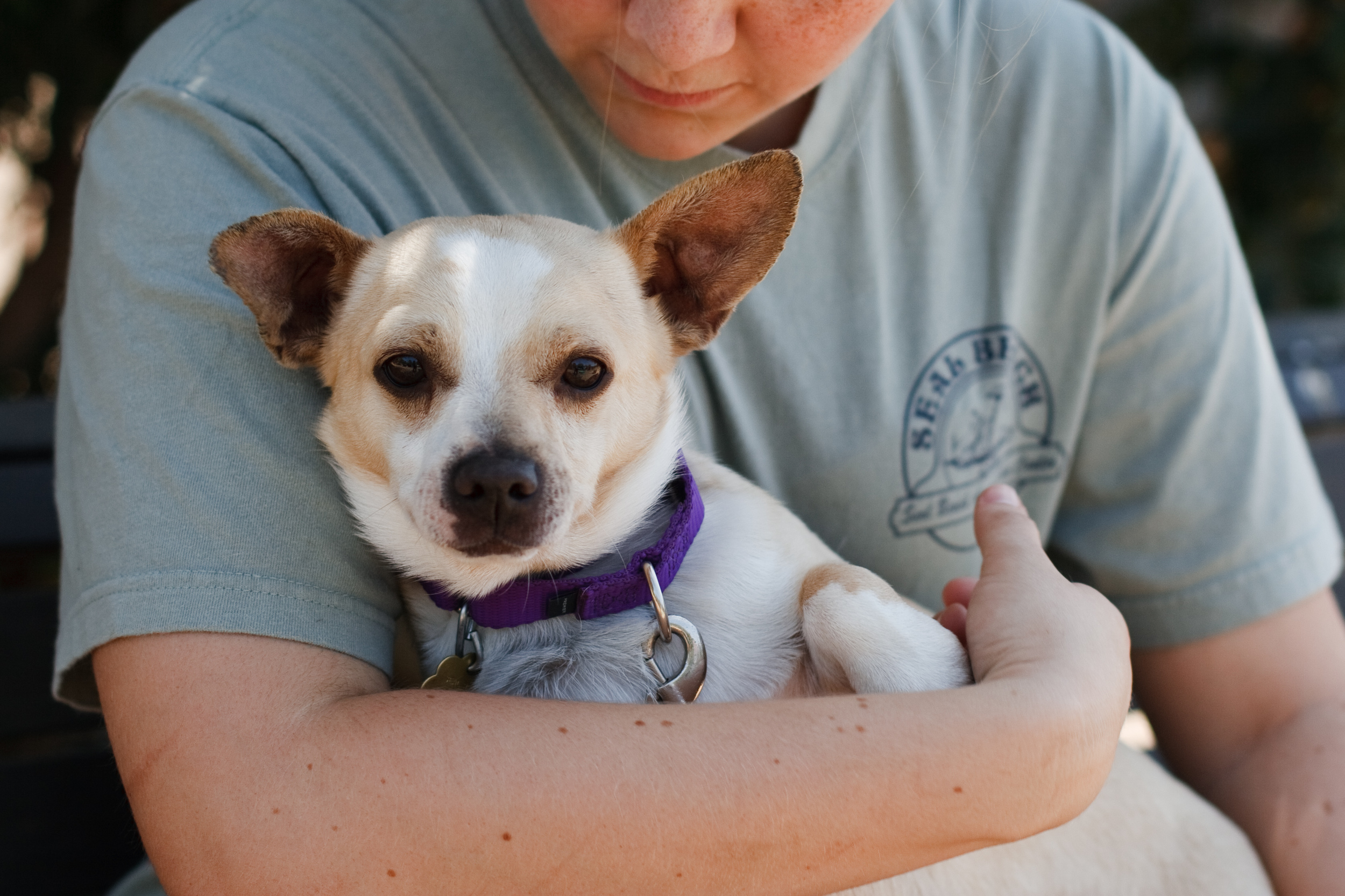 Ellingsen Photography Orange County SBACC Adoptable Shelter Dogs-Tyson