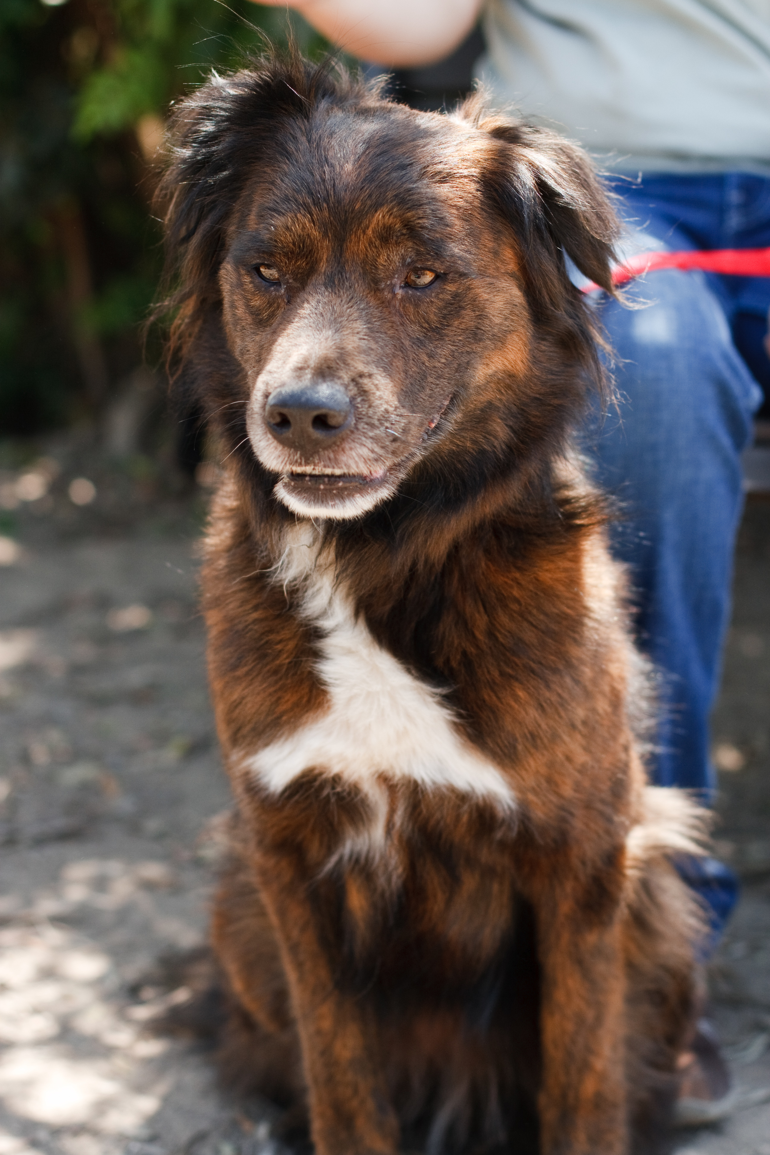 Ellingsen Photography Orange County SBACC Adoptable Shelter Dogs-Winnie
