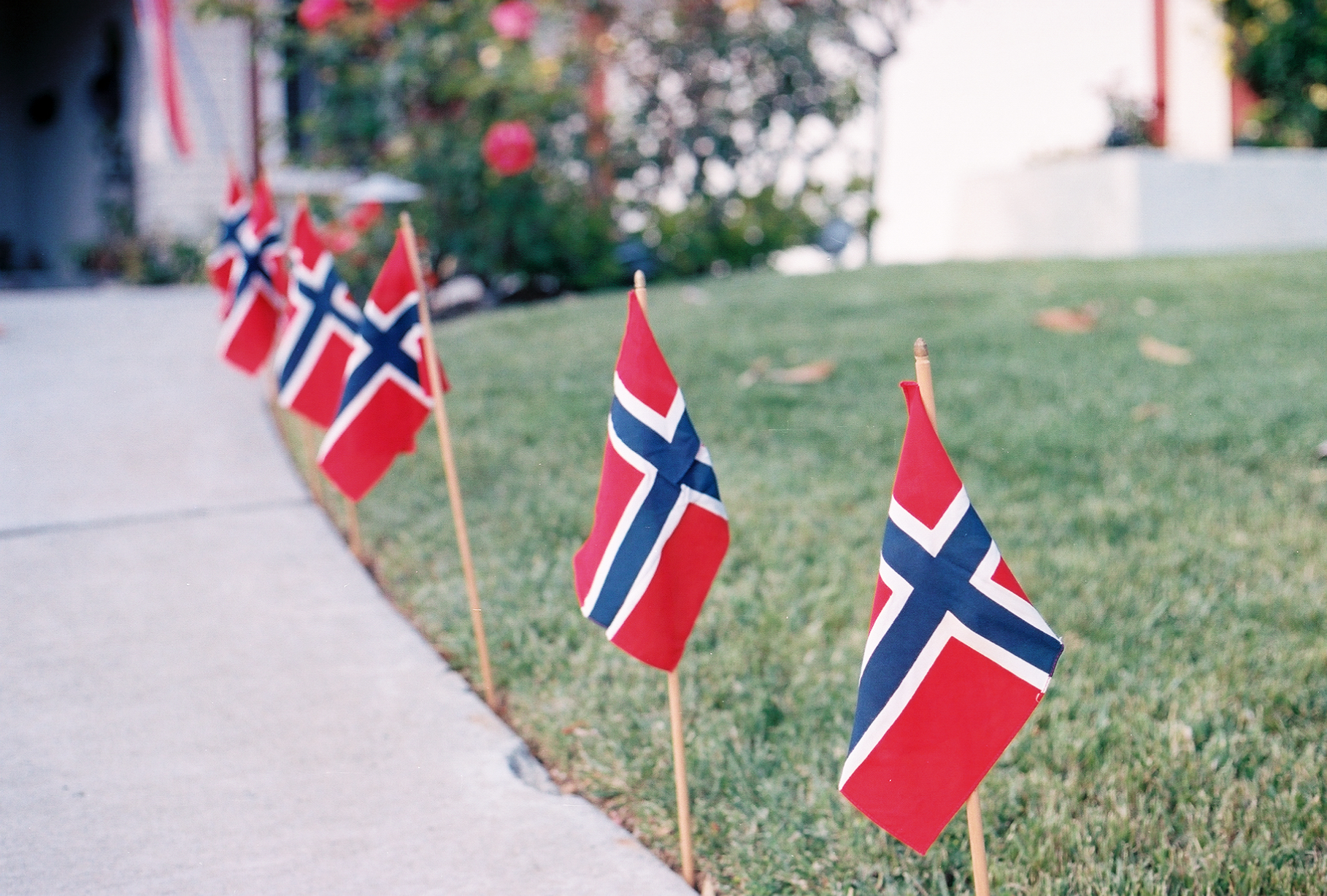 Ellingsen Photography Syttende Mai Norway National Day Flags in CA