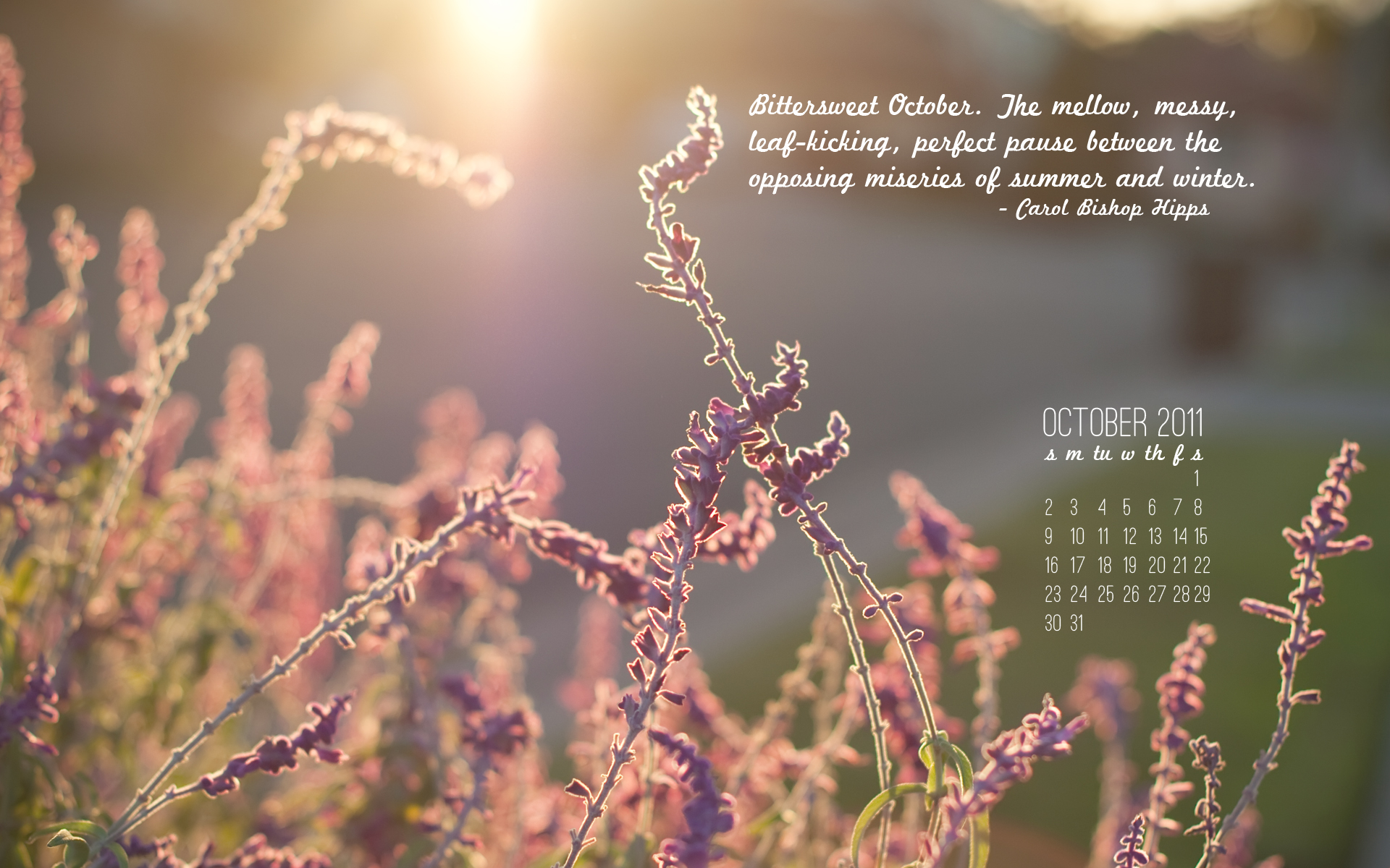 Ellingsen Photography October 2011 Desktop Background Free-Preview
