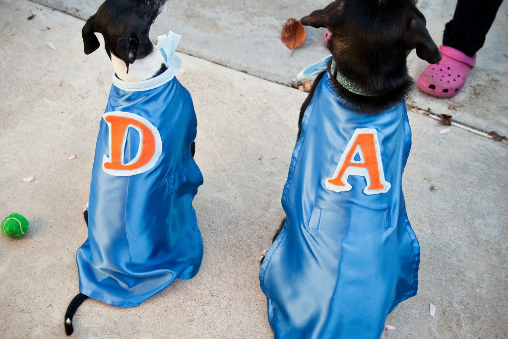 Ellingsen Photography Halloween Dog Costume Capes