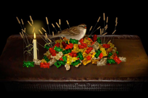 3 Natures Mortes  Three short animated still life paintings featuring gummibears, bees, a bird, and a frog-pricot.These pieces were made at the MacDowell Colony. I constructed anoutdoor greenscreen and a bird blind to film the chipping sparrows without being seen. I shot stop-motion animationon an indoor tabletop. My biggest thrill was the day I successfully Frankensteined the frog-pricot. Video, 2D animation and sound design|2 minutes |©2011