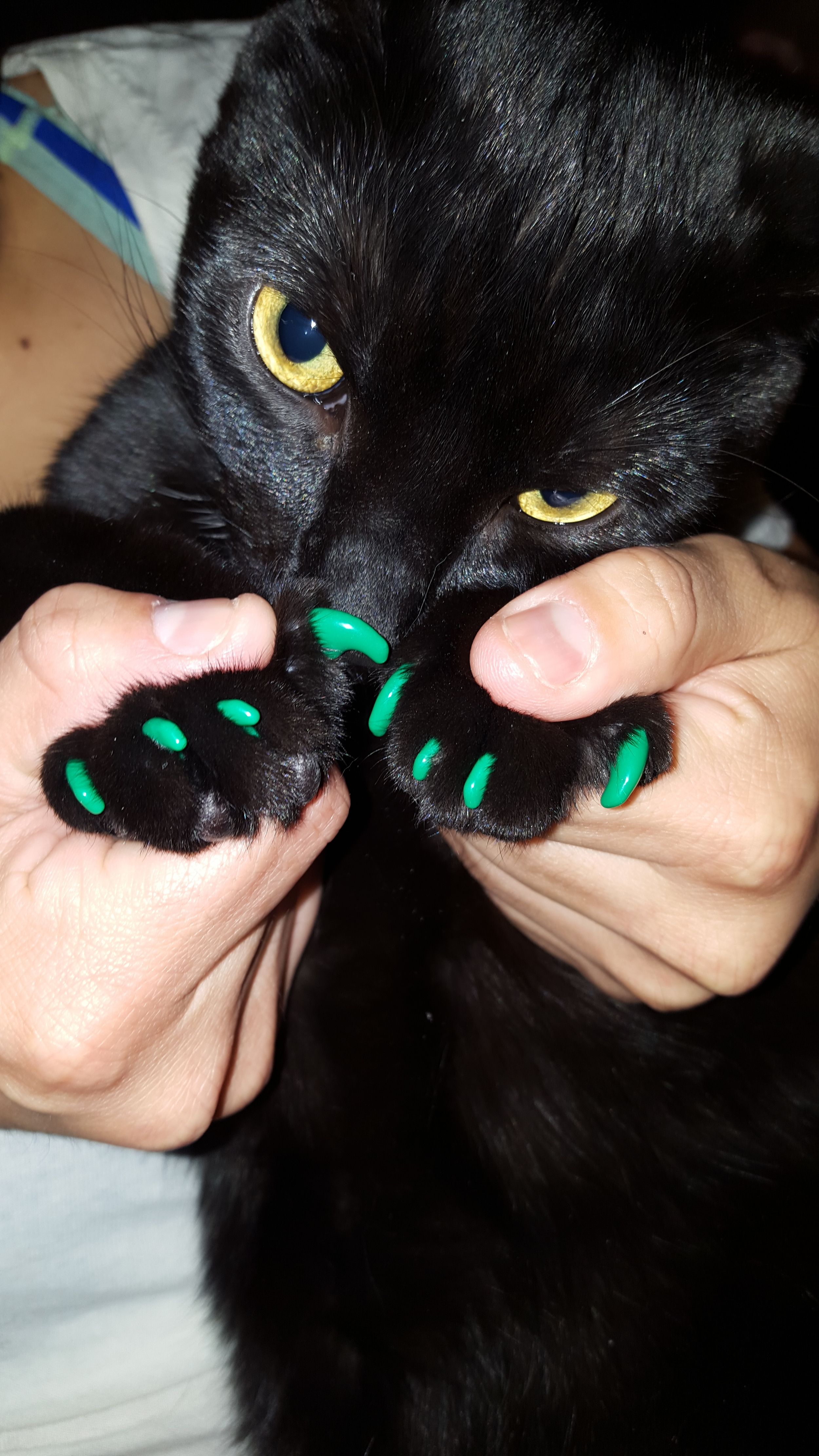 St Patrick's Day Pawdicure