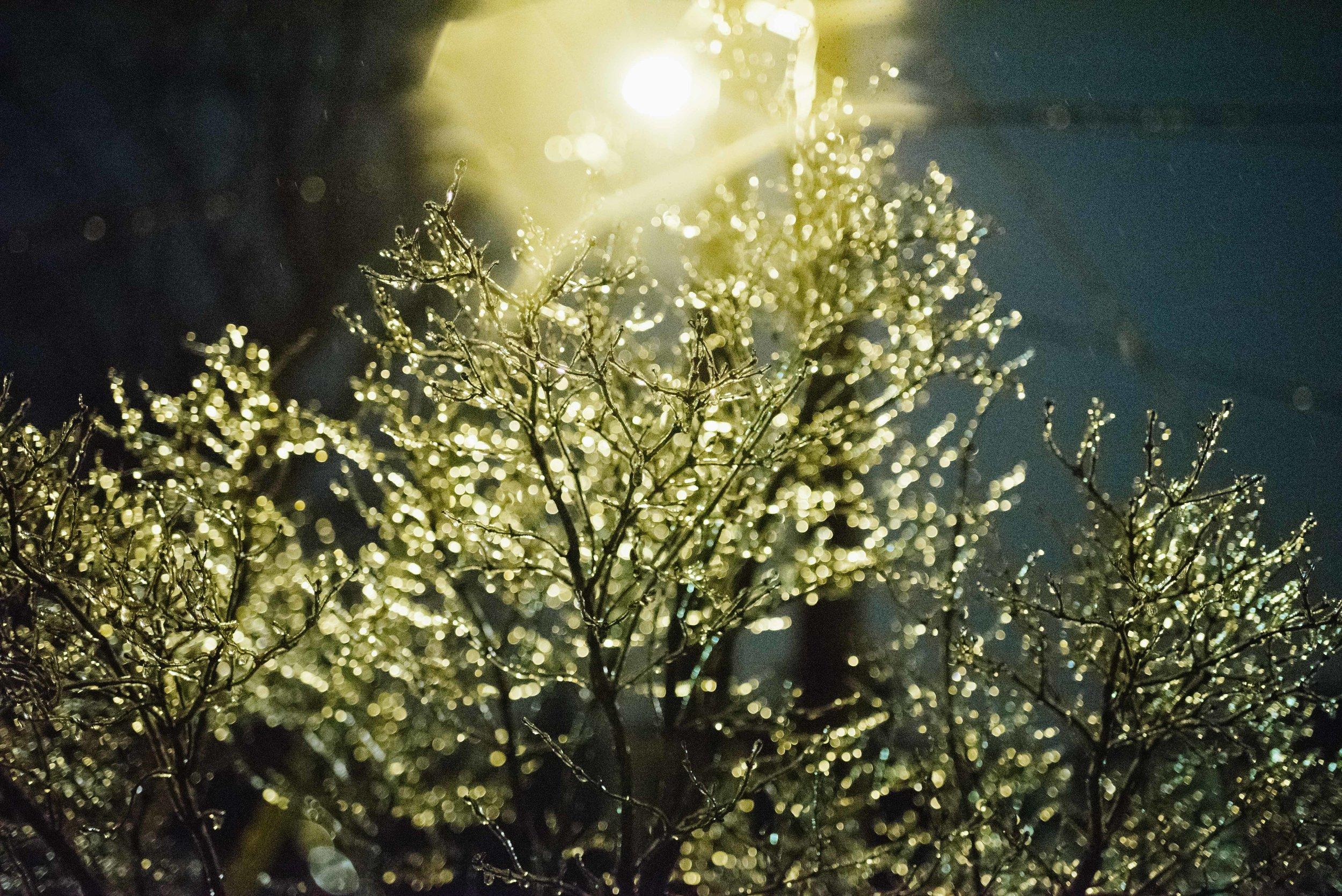 SurrealNightPhotos-3107.jpg
