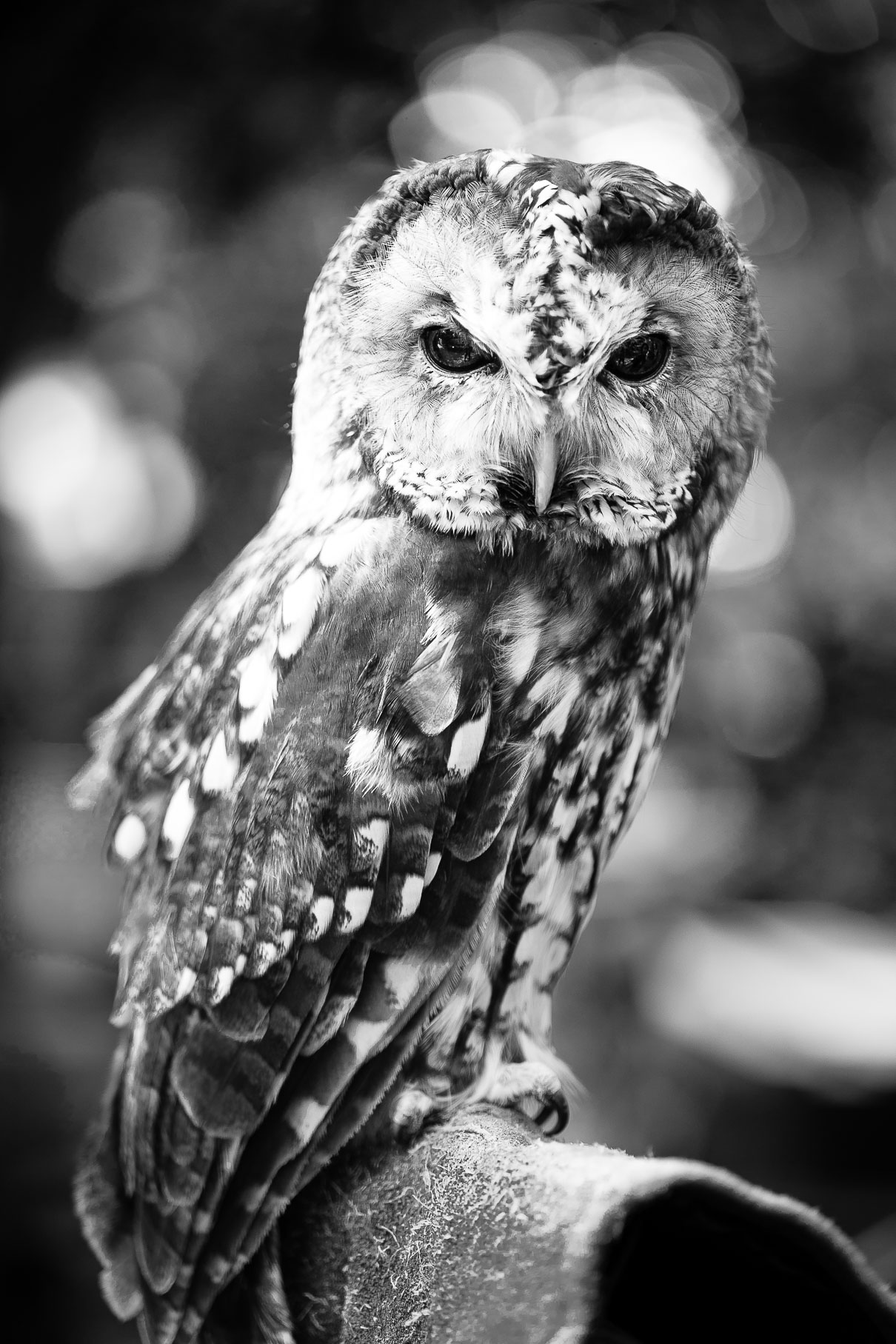 alexa-wright-photography-owl.jpg