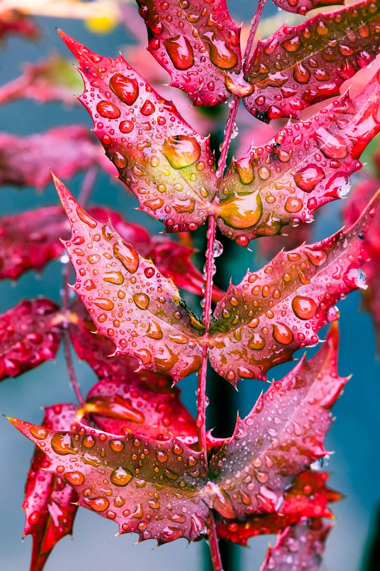 alexa-wright-color-photography-1.jpg