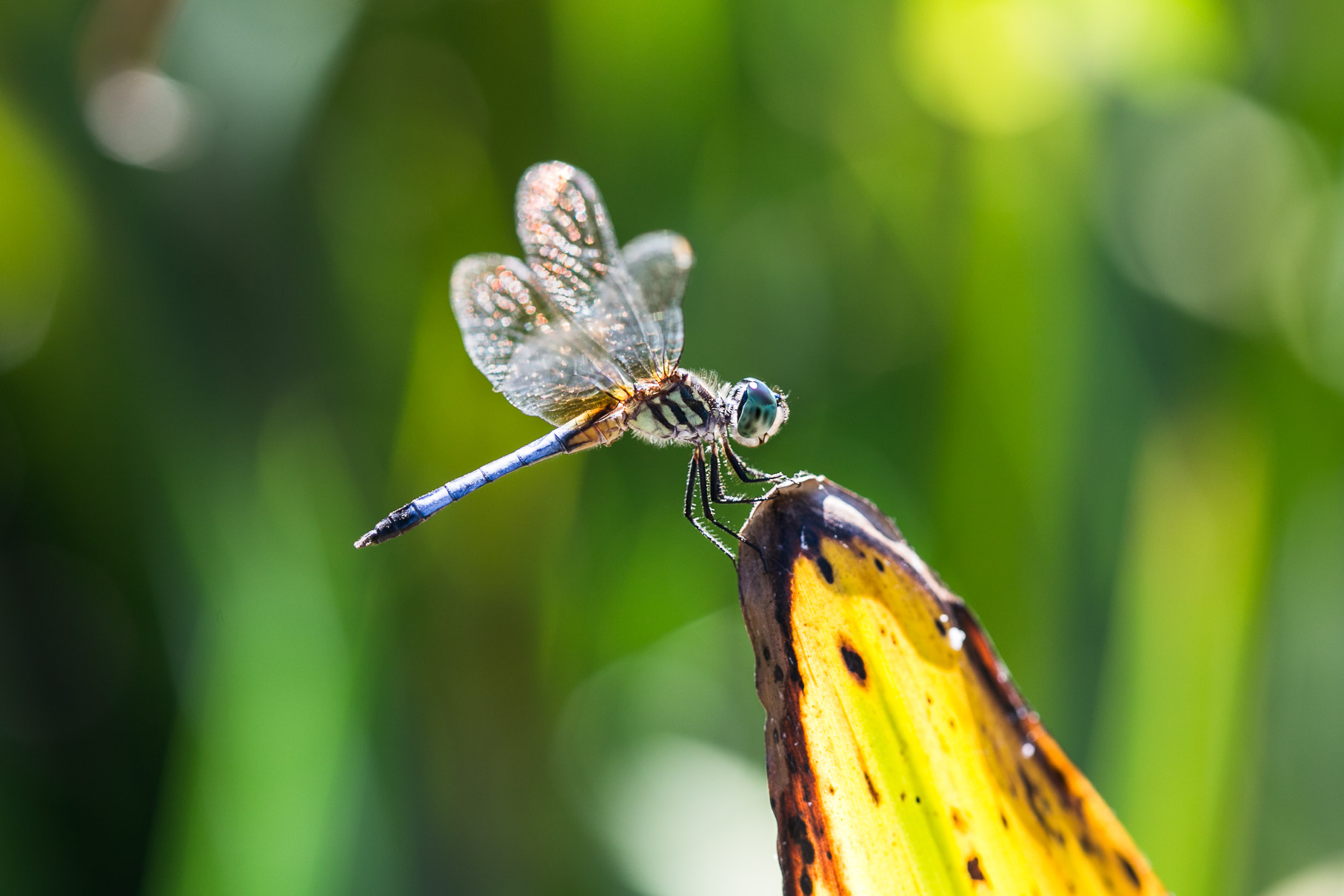 alexa-wright-color-photography-dragonfly.jpg