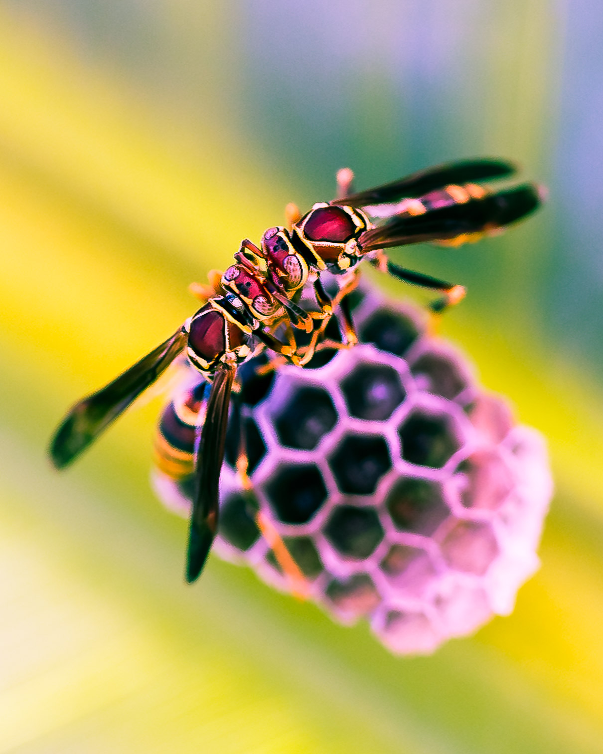 alexa-wright-color-photography-wasps.jpg