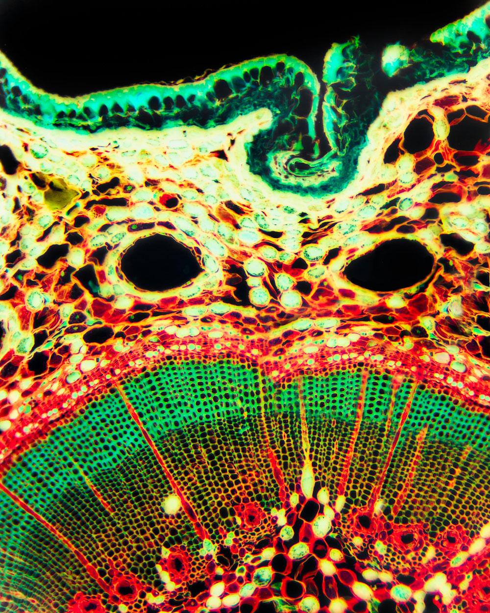 alexa-wright-microscope.jpg