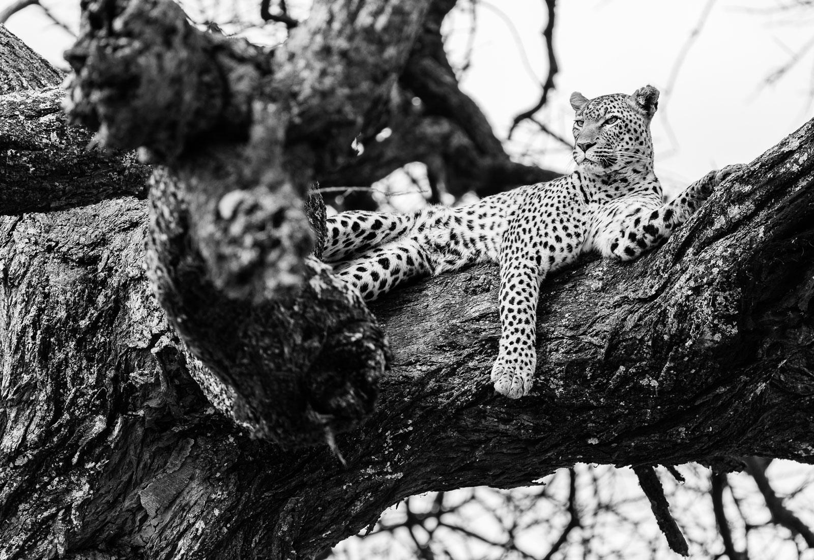alexa-wright-leopard.jpg