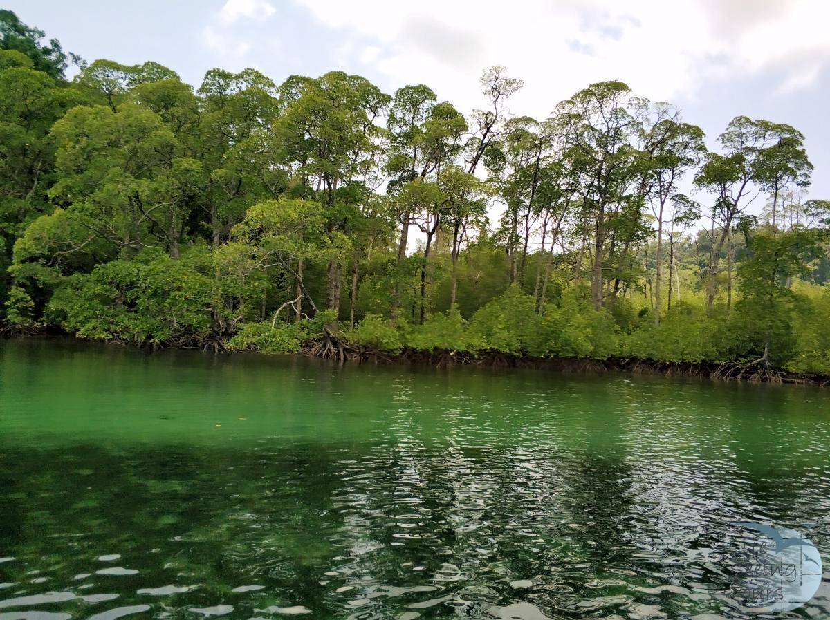 Mangrove Forest.jpg