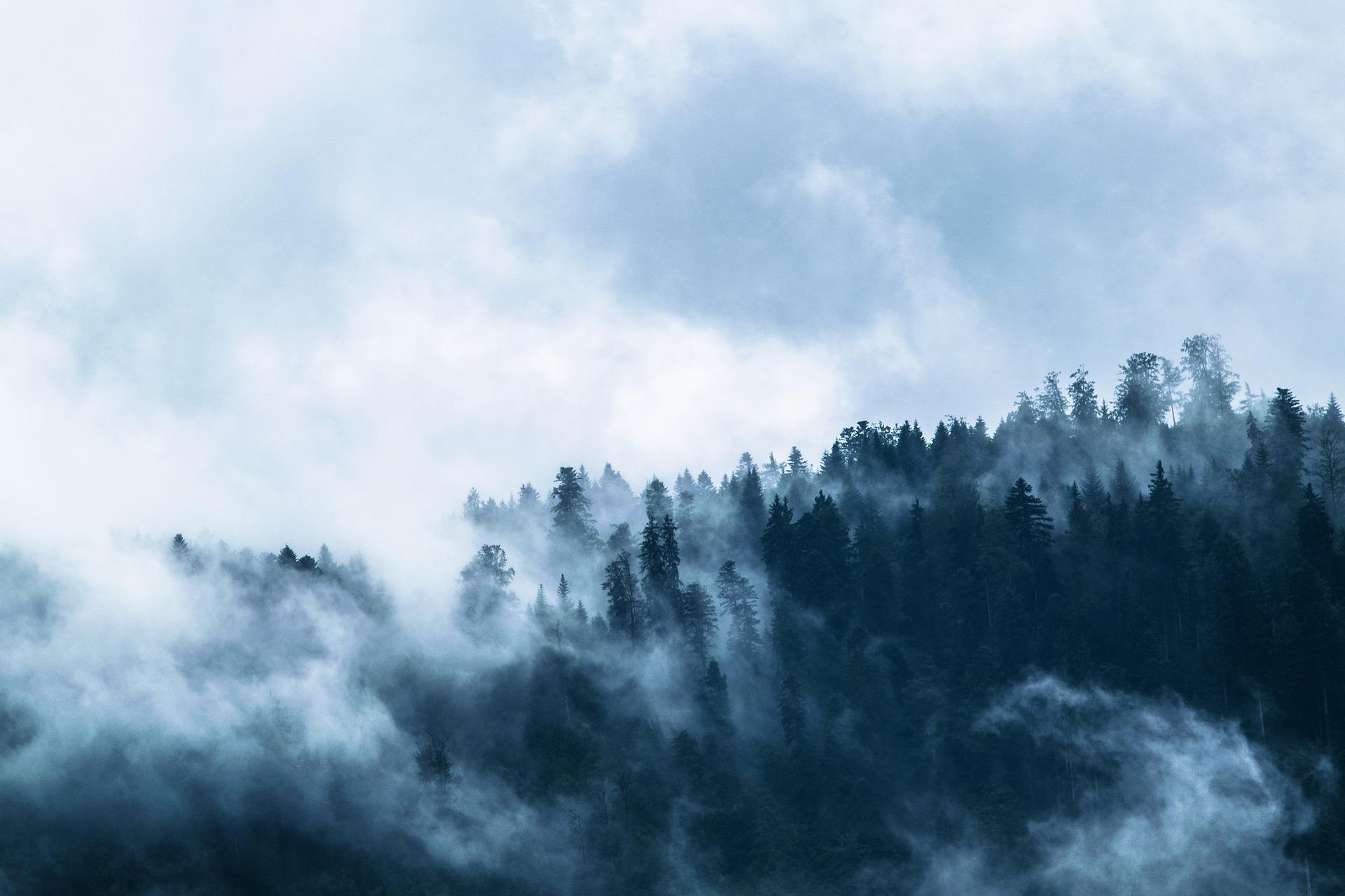 fog-1535201_1920.jpg