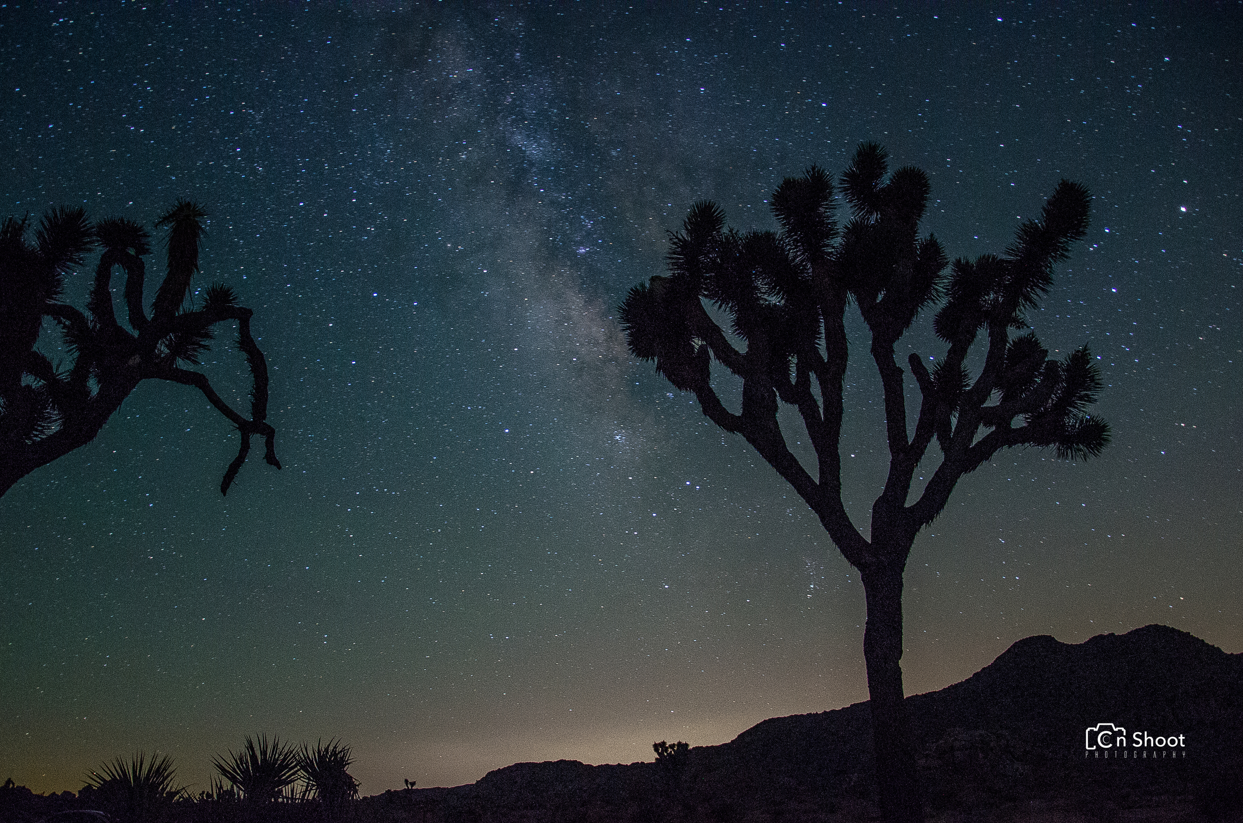Joshua Tree-2.jpg