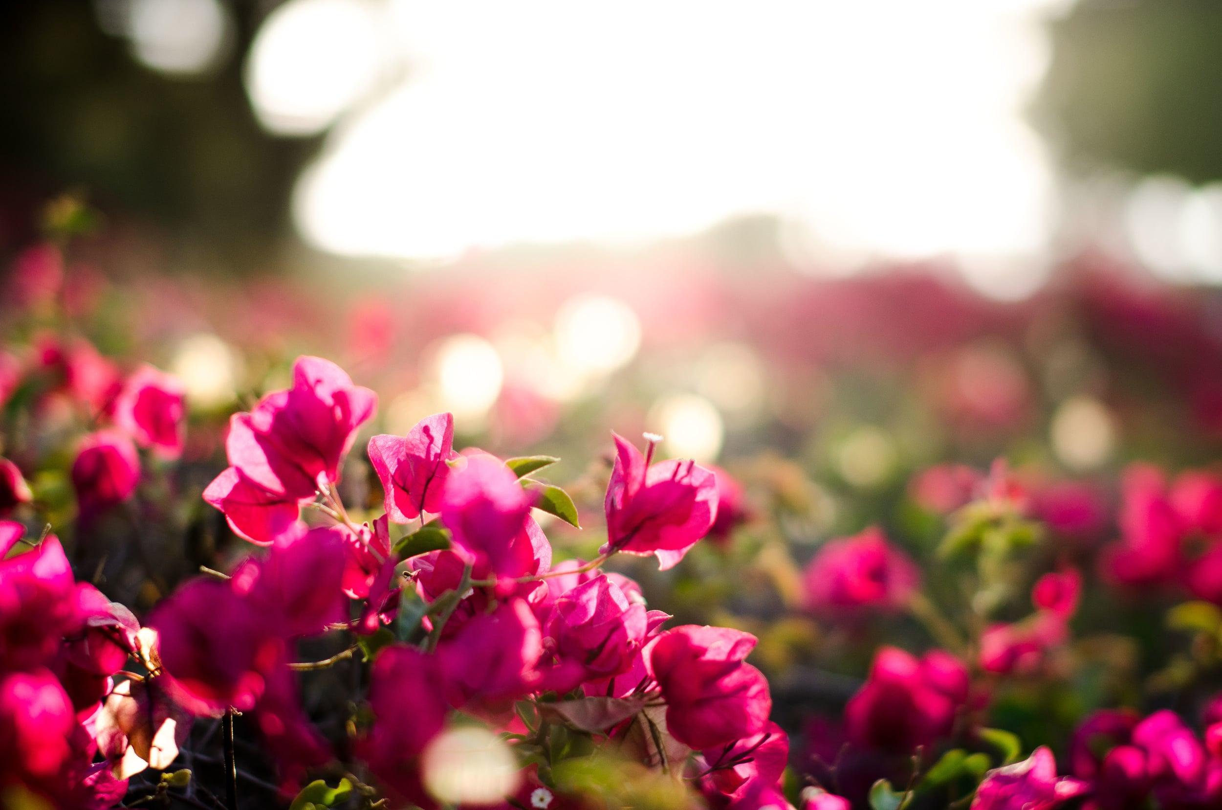 Afternoon Flower-1.jpg